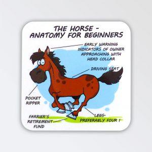 Horse Anatomy Coaster